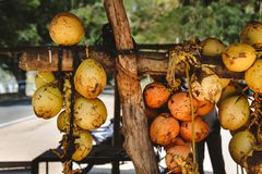 A bunch of yellow coconuts is on sale. Photo of a bunch of yellow saling coconuts Royalty Free Stock Photography