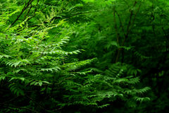 Photo of a bush in the forest. Stock Photo