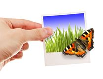 Photo with butterfly. Hand holding photo with butterfly sitting on it Stock Images