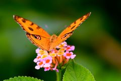 Photo of Butterfly royalty free stock image