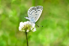 Photo of Butterfly sucking flower with delicious bokeh Stock Photos