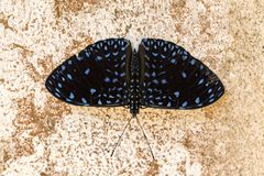Butterfly on the wall. Photo of butterfly on the walln royalty free stock images