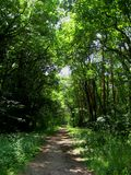 Photo with the calm, warm summer landscape background forest trails in the sunlight Stock Photos
