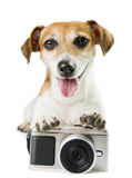 Photo camera dog Stock Photo