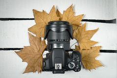 Photo camera surrounded by dry tree leaves stock photo