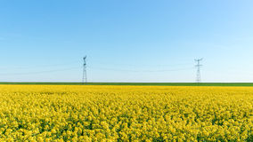 Photo of canola, rapeseed flower Stock Photos