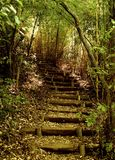 Trail the Coihue of the Radal Siete Tazas National Park in Chile stock images