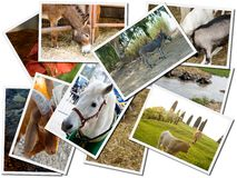 Photo cards of animals Stock Photo
