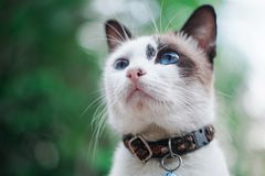 Photo Of Cat Royalty Free Stock Photography