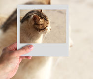 Photo of cat Royalty Free Stock Photo