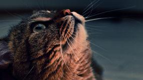 Photo of the cat on a dark background Stock Photography