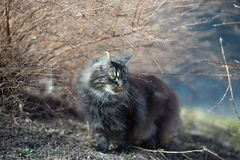 Photo of Cat Beside Leafless Plant Royalty Free Stock Photography