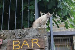 Drunk cat. Photo of cat leaning on the gate, taking advantage of the word `bar` to give the idea that the cat drank too much stock image