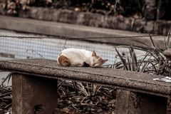 Photo of a Cat Sleeping on Gray Concrete Bench Royalty Free Stock Images
