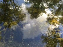 Clear reflective sky on clean forest water. Photo of clear forest water reflecting the sky and clouds. Weather is clear, taken in the florida everglades Royalty Free Stock Images