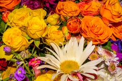 Photo of close-up abstract flower background consist of many flowers Stock Photos