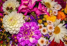 Photo of close-up abstract flower background consist of many flowers Stock Photo