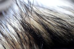 A photo of close-up of a fur royalty free stock images