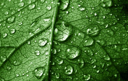 Photo Of Close Up Leaf With Water Drops Royalty Free Stock Photography