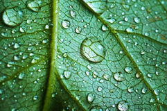 Photo Of Close Up Leaf With Water Drops Stock Photography