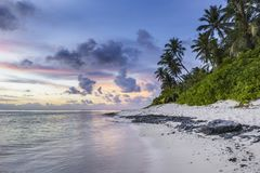 Photo of Coconut Trees and Green Leaf Plants Near on Sea during Daytime Stock Image