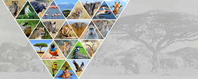 Photo collage african animals. Travel concept stock photo