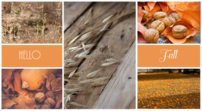 Photo collage, autumn, dry colorful leaves, orange, yellow, pumpkin, walnuts, oats, straw, meadow, park, city, countryside, sticke Royalty Free Stock Images