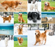 Photo collage of dogs Royalty Free Stock Photos