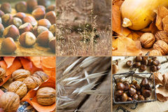 Photo collage six square images autumn, fall, hazelnuts, walnuts, dry colorful leaves, chestnuts in wicker basket, pumpkin. Meadow plants, thanksgiving, cozy Royalty Free Stock Photography