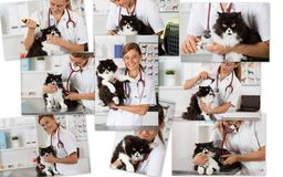 Photo collage of a veterinary clinic Stock Photos