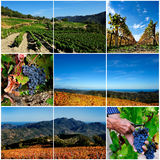 Photo collage of the vineyard Royalty Free Stock Photography
