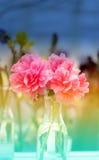 Photo color beautiful peonies Stock Photography