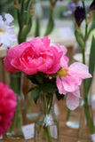 Photo color beautiful peonies Royalty Free Stock Image