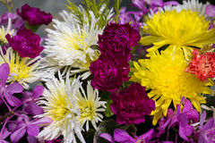 Colorful flowers And it is refreshing in the summer with clear w Stock Photography