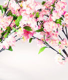 Photo of colorful sweet-smelling flowers Royalty Free Stock Photos