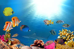 Photo of a coral colony and shark. Photo of a coral colony on a reef, Egypt Stock Images