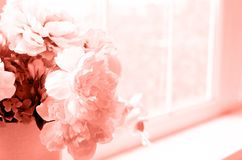 Photo of coral color flower arrangement on the window royalty free stock photo