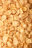Cornflakes background Stock Images