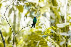 Birds of Parque Das Aves. Photo of a couple of hummingbird, in Parque Das Aves, Brazil royalty free stock images