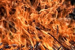 Photo courante brûlante de fond en bois de nature de danger de lutte contre l'incendie du feu photographie stock