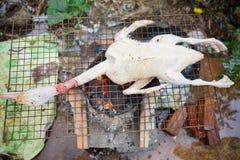 Photo courante - canard grillant la cuisson Image stock