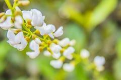 Photo courante de la fleur blanche photos libres de droits