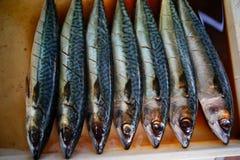 Photo courante - les poissons de saba ont fermenté le sel et le suace Photo libre de droits