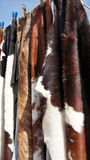 Cow hide fur rugs Royalty Free Stock Images