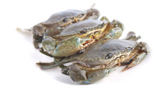 Photo of crab Royalty Free Stock Images