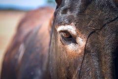 Photo of a cute  donkey. On the farm Stock Photo
