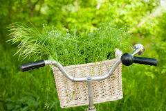 Photo of cute helm of bicycle with basket full of green bunch on Royalty Free Stock Photos