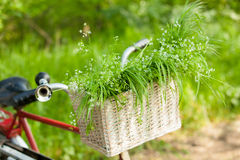 Photo of cute helm of bicycle with basket full of green bunch on Stock Photos