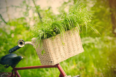 Photo of cute helm of bicycle with basket full of green bunch on Royalty Free Stock Photography