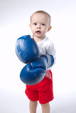 Photo of cute little boxer on white. Background Stock Image